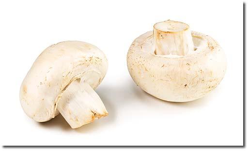 Large mushrooms