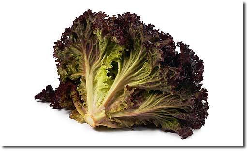 rezepte mit lollo rosso salat. Black Bedroom Furniture Sets. Home Design Ideas