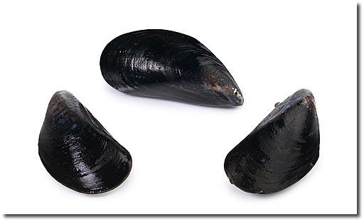 Mussels Mussels